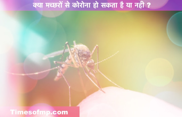 Health News in Hindi - Can mosquitoes be carriers of corona virus