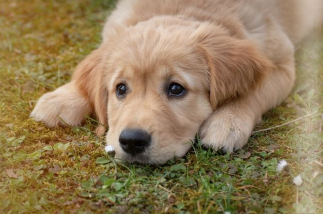 Is chocolate poisonous for dogs