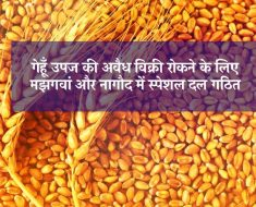 Special team formed in Majhgawan and Nagod to stop illegal sale of wheat produce