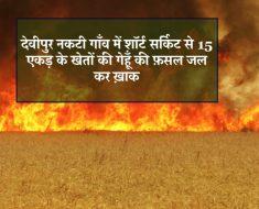 Raghuraj Nagar News - In Devipur Nakti village fields was burnt by a short circuit