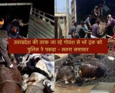 Satna News - The police caught the loaded truck from the bovine going towards Uttar Pradesh